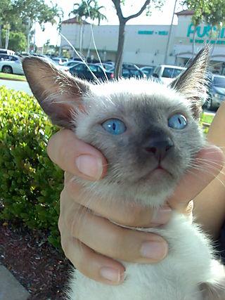 Cute Kitty, Kitten