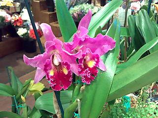 Orchids, Miami
